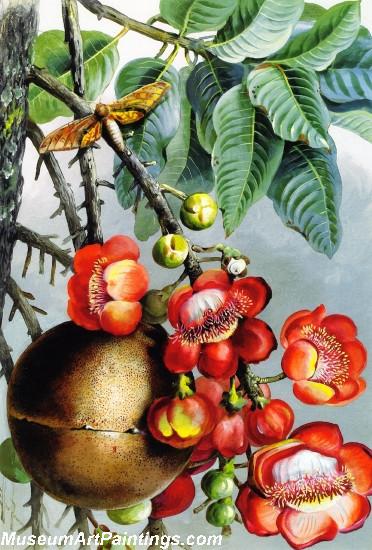 Couroupita Guianeses British Guiana Painting