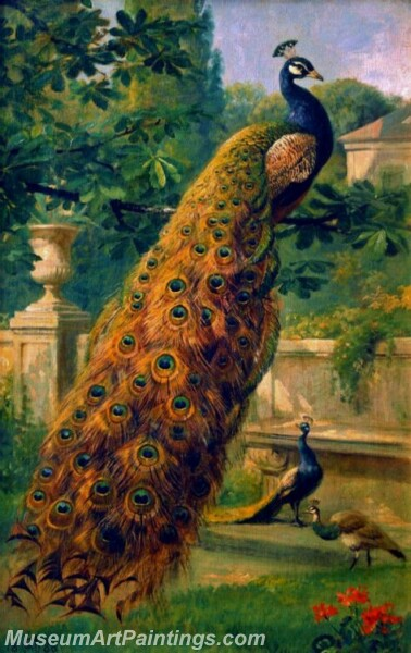 Peacock Oil Paintings PMP021