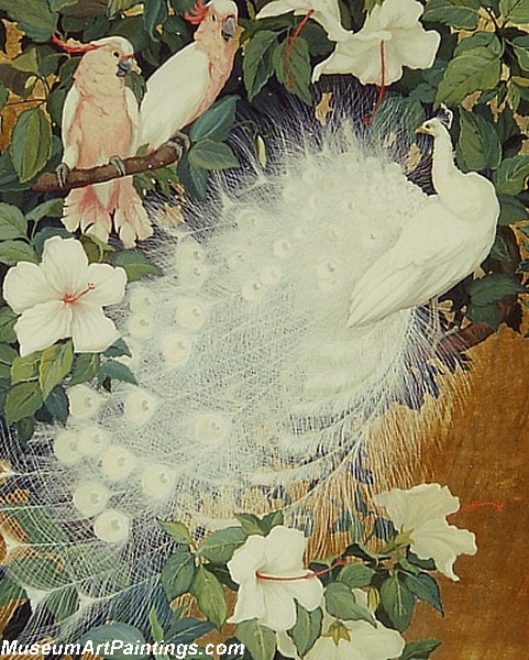 Peacock Paintings Cockatoos and White Peacock
