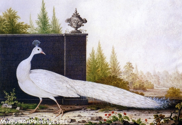 The White Peacock Painting